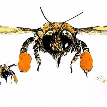 Swarm (front)