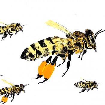 Swarm (side)